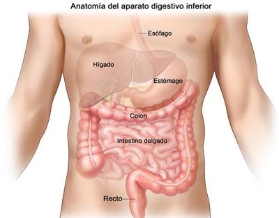sistema-digestivo[1]